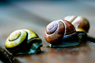 Snails, by schillergarcia on flickr